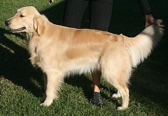 Jake 9 months old, Rancho show
