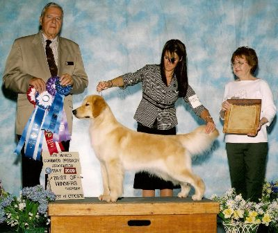 HOPE (AmCH/ U-CH Promise's D'Word O'Faith) at the Rio Grande Valley Golden Retriever Club Specialty in New Mexico
